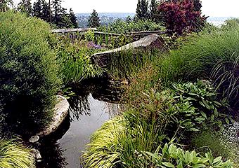 Finn Hill Meadows Garden